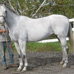 Essence Of Charm (2005) Thoroughbred By Silver Charm