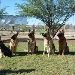 The boys 2015  Duke, Maxx, Drako, Toby Sarge
