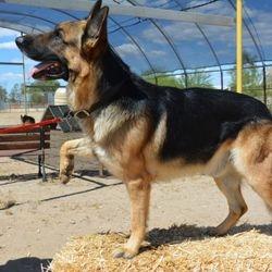 Drako May 2015 102 pounds