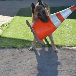 Toby's favorite toy is a traffic cone. Very heavy my females can not pick it up.