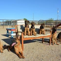 Riley, Rikku, Axel, Sadie, Willow, Peaches, Pixie