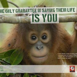 poster created to help find more captive orangutans