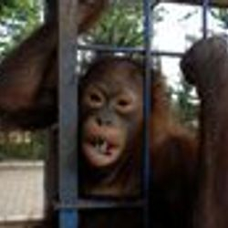 rani now rescued