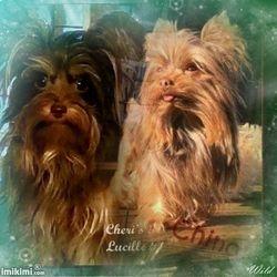 Cheri's Lucille Ball and Cheri's Cappucino