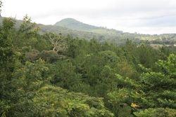 Brevun Forest