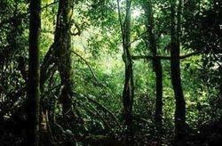 Brycimm Wilderness