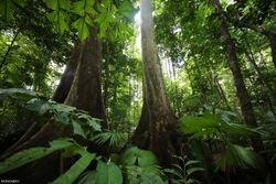 Wey Rainforest