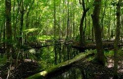 Famay Marsh