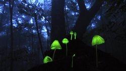 Mushroom Hollow