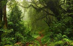 Rykash Jungle