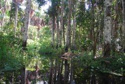 Bosins Swamp
