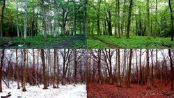 Four Season Forest
