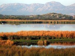 Fruhis Wetlands