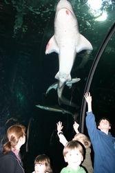 Hello, Sharkey!