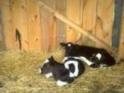 Organic High Energy 16% Dairy Pellets