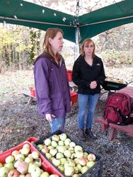 Apples from the Gleaning Project