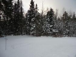 backyard snow and trees