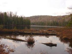 Bullhead Pond