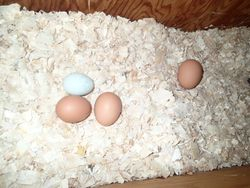 Some of our eggs