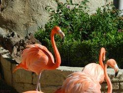 Flamingo?s