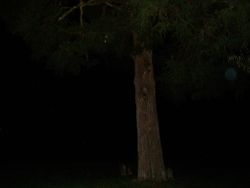 Large faint orb in the tree.