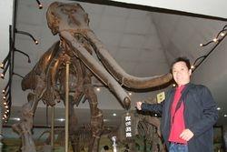 Mammoth or Stegodon?