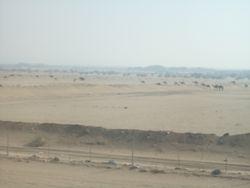 Onderweg naar Medinah