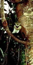 Monkey in Da Bush