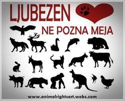 Animal Rights Art by Mariana Vidmar
