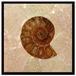 LYR Nautilus Crackle