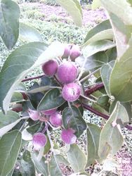 Bearing Early Fruit