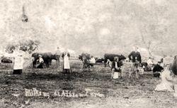 Milking cows, Albion Farm - 1862