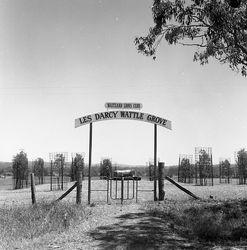 Les Darcy Memorial Wattle Grove Woodville