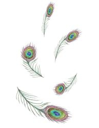 Peacock Feathers 5