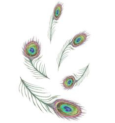 Peacock Feathers 4