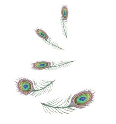 Peacock Feathers 6