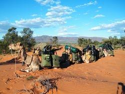 Camel Safari at Beltana Station, Flinders Ranges, South Australia