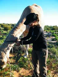 Customers bond well with the safari camels. Outback Australian Camels