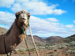 The Camel Trekking is Awesome