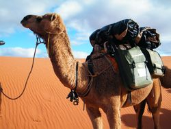 Camel Trekking in Remote Desert Environments