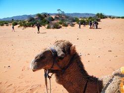 Group Camel Safaris and Treks in Australia