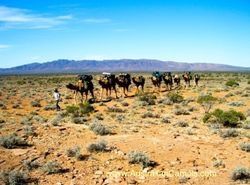 Outback Australian Camels, Safaris, Treks, Expeditions and Camel Expedition Training.
