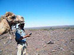 Camel Trekking in the Wilderness