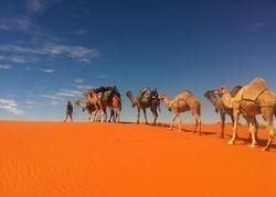 Camel Desert Crossing