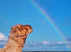 Rainbow Inspiration