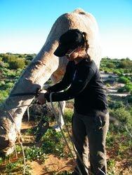 Camel Handling, Beltana Station Camel Safaris, Flinders Ranges, South Australia
