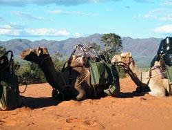 Outback Scenery. Beltana Station Camel Safaris