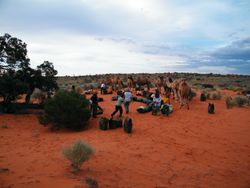 Sand Dune Camping with the camels on Beltana Station, South Australia