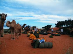 Living with camels on safari, Beltana Station, South Australia