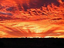 Awesome sunset during the camel Safari, Beltana Station Camel Safaris, South Australia